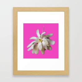 Star Magnolia on Pink Background Framed Art Print
