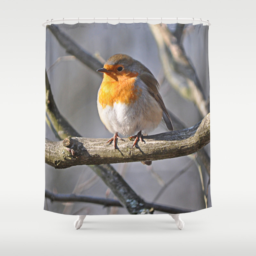 Robin Redbreast Shower Curtain by Pirminnohr (CTN915575) photo