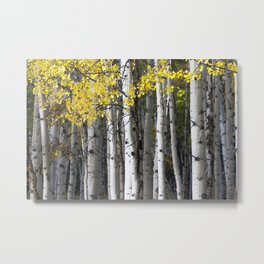 Yellow, Black, and White // Aspen Trees in Crested Butte Metal Print