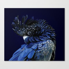 Australian Red-Tailed Black Cockatoo in Blue Canvas Print