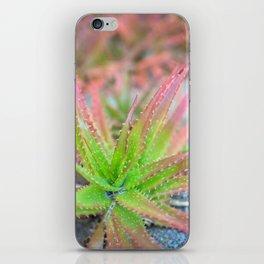 Pink & Green Succulent iPhone Skin