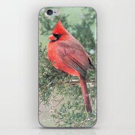 Christmas Bird (Northern Cardinal) iPhone Skin