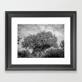 B+W: Tree of Life (Animal Kingdom) Framed Art Print