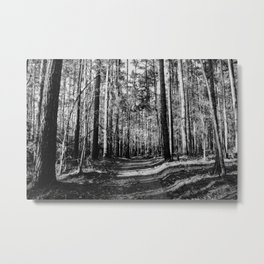 Forest Trail Metal Print