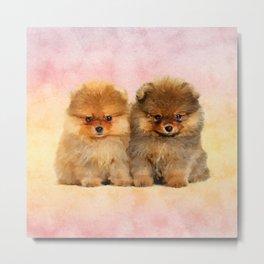 Cute Pomeranian Puppies Metal Print