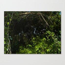 green secret Canvas Print