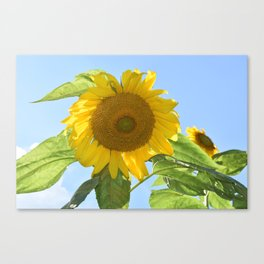 Don't Look Into the Sun(flower)! Canvas Print