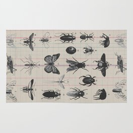 Vintage Insect Study on antique 1800's Ledger paper print Rug