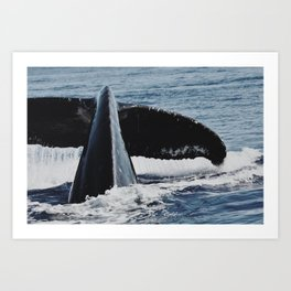 Whale Splash Art Print