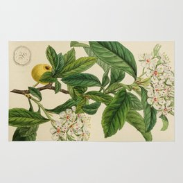 Edwards' botanical register 1836 Rug