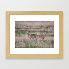 Deer No. 3 Framed Art Print
