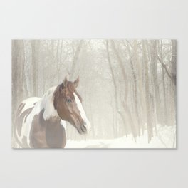 Sonny in the snow Canvas Print