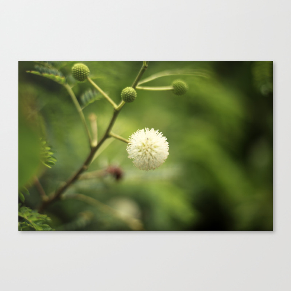Horton Hears A Who Canvas Print by Ktown23 CNV9036676