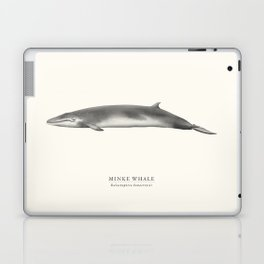 Minke Whale Laptop & iPad Skin
