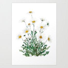 white Margaret daisy watercolor Art Print