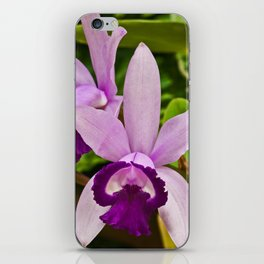 Cattleya Orchid iPhone Skin