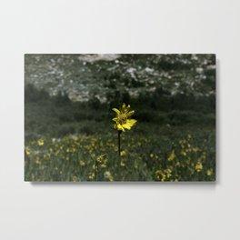 Alpine flavanoids Metal Print