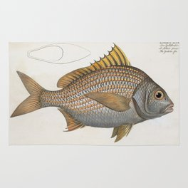 Vintage Illustration of an Yellow-Fin Grunt (1785) Rug