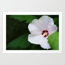 Tiny Flower, Big Beauty Art Print