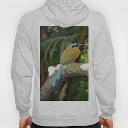 Motmot bird Hoody