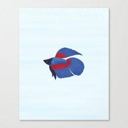 betta splendens royal blue male Canvas Print