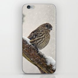 Facing the Storm (House Finch) iPhone Skin