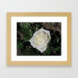 A white rose Framed Art Print