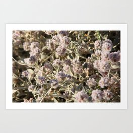 Outback flowers Art Print