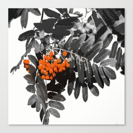 Red Rowan Berries In Black And White Background #decor #society6 Canvas Print