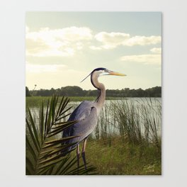 Great Blue Heron in the Bulrushes Canvas Print