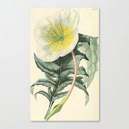 1479 Canvas Print