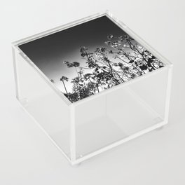Nature in The City Acrylic Box