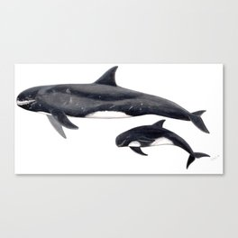 Pygmy killer whale Canvas Print