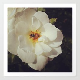 White Rose And Working Bee Art Print
