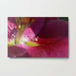 Lily Spider Metal Print