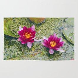 Flower. Red Water-lily (Nymphaea 'James Brydon'). Norfolk, UK. Rug