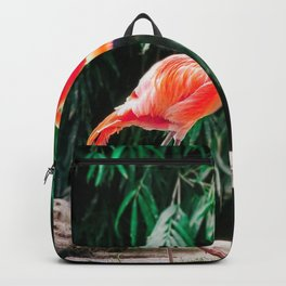 Flamingo Dance (Color) Backpack