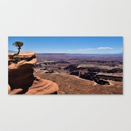 Tree Overlooking the Canyonlands Canvas Print