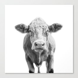 Highland Cow Portrait | Animal Photography | Black and White | Art Print Minimalism | Farm Animal Canvas Print