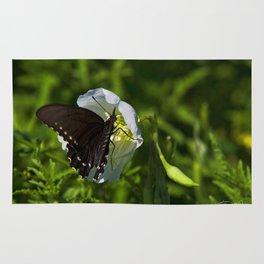 Black Swallowtail Rug