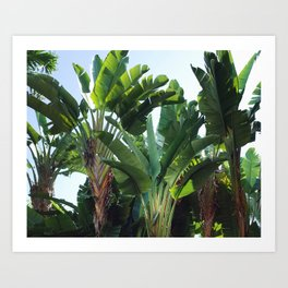 Tropical Forest / Nature Photography Art Print