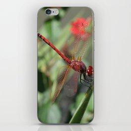 Red Skimmer or Firecracker Dragonfly iPhone Skin