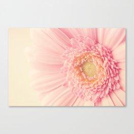 Pastel Pink Macro Canvas Print