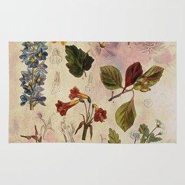 Botanical Study #1 Rug