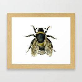 Vintage Bee Illustration Framed Art Print