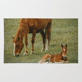 Horse And Foal Rug