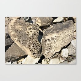 Stone Lace Wings Rock Boulder Washington Northwest Geology Geologist Sandstone Chuckanut Formation Canvas Print