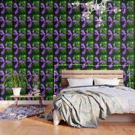 Wild Purple Iris Wallpaper