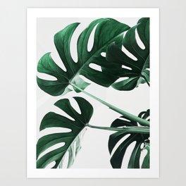 Monstera, Leaves, Plant, Green, Scandinavian, Minimal, Modern, Wall art Art Print