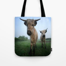 Young White High Park Cattle Tote Bag